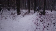 White horse with sleigh ride through the woods in winter Stock Footage
