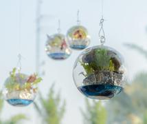 Vegetable plant decorate in sphere glass - stock photo