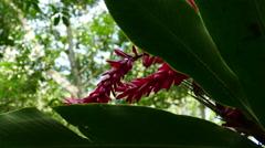 Coffee plantation Selva Negra Stock Footage