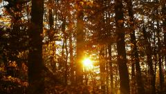 Rays of sun filtering through forest trees Stock Footage
