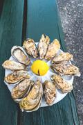 A dozen oysters on a plastic plate Stock Photos