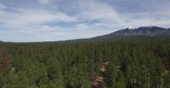 Rising through trees to reveal vast forest and distant mountain Stock Footage