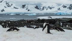 Time Lapse of Penguin Colony (4K) Stock Footage