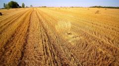 Big rolls oh haystacks on the grain field Stock Footage