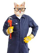 Cat plumber with adjustable wrench. Stock Photos
