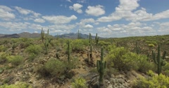 Arial shot though field of cacti Stock Footage