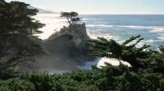 Lone Cypress Monterey Coast Stock Footage