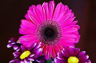 Stock Photo of Arrangement Of Purple Flowers Against Dark Background