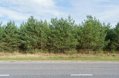 Green pine forest along an asphalt road (highway) - stock photo