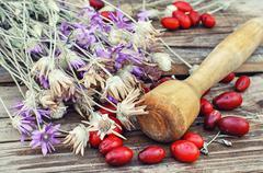 Dried medicinal plants Stock Photos