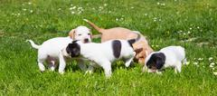 Mixed-breed cute little puppies on grass. Stock Photos