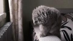 Little cute gray cat washes. Stock Footage