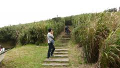 POV enter footpath staircase in high grass bush hillside field, climb up Stock Footage