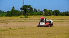 A combine harvests ripe rice in the field on a sunny day Stock Footage