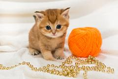 Little kitty and a skein of wool Stock Photos