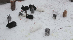 Rabbits in the winter - stock footage