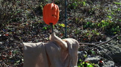 scarecrow in garden up close scare crow - stock footage