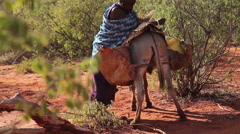 Maasai lady loading barrels of water onto donkey Stock Footage