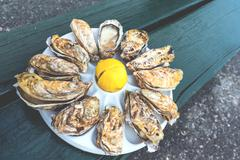 A dozen oysters on a plastic plate - stock photo