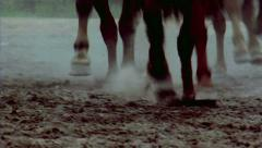 racing horses in slowmotion - stock footage