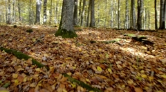 Steadycam walking in autumn forest, Fall season walking - stock footage