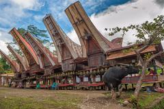 Tongkonan houses, traditional Torajan buildings, Tana Toraja, Sulawesi, Indon Stock Photos