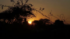 Sunrise in Africa, Tanzania with the Maasai Mara Stock Footage
