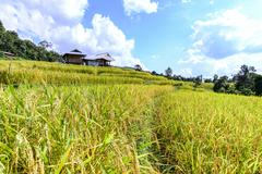 Terraced rice field with mountain background at Ban Pa Bong Piang, Chiang Mai Stock Photos