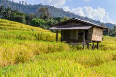 Cottage in middle of rice field with mountain background at Ban Pa Bong Piang - stock photo