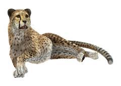 Big Cat Cheetah Stock Illustration