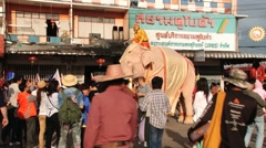 People make photos with the rare white elephant in Surin, Thailand. Stock Footage
