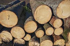 Stacked tree trunks Bavaria Germany Europe - stock photo