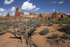 Rock pinnacles dead bristlecone pine Pinus aristata in front Arches National Stock Photos