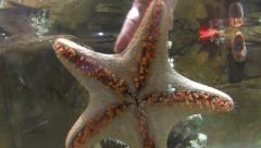 Starfish Underwater With Hand Stock Footage