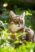 Beautiful domestic cat - stock photo
