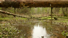 The fallen Log over the River. Autumn daytime. Smooth dolly shot. Stock Footage