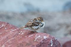 Sparrow - stock photo