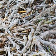 Interesting roots Stock Photos