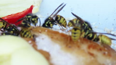 Wasps eat the lard and pepper Stock Footage