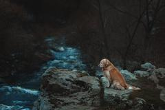 Sad dog is sitting on the edge of a precipice. Stock Photos