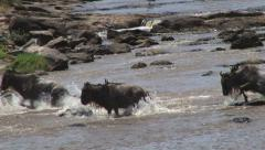 Crocodile hunts down a wildebeest Stock Footage