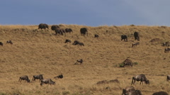 Elephants coming down a steep hill Stock Footage