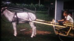 2864 - farmer hooks up the donkey cart for the boys - vintage film home movie - stock footage