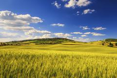 Stock Photo of Tuscany spring, Pienza medieval village and wheat. Siena, Italy