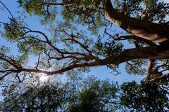 Treetop in chobe, Botswana Stock Photos