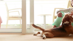 Funny domestic scene: a master caresses her pet beagle and looks him in the eye Stock Footage