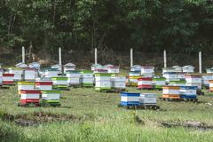 Beehives in bee farm Stock Photos