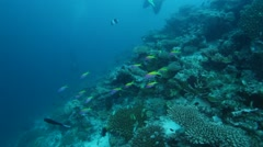 Shallow Water with Sealife of Coral Reef  - stock footage
