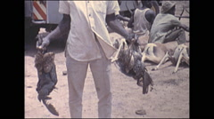 Vintage 16mm film, 1972, Kenya, hunters with dead birds and impala - stock footage
