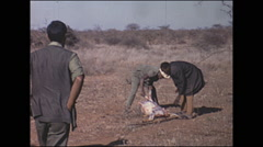 Vintage 16mm film, 1972, Kenya, hunters with dead impala Stock Footage
